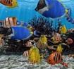 3D Fish School Screensaver 4.91 - hình nền đẹp cho máy tính
